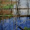 Beaver-Dam-3